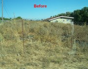 land clearing before